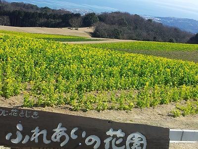 花さじき2014.03.12.jpg