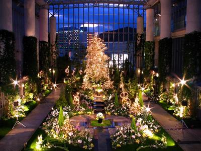 奇跡の星の植物館クリスマスイルミネーション1