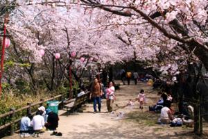 曲田山公園