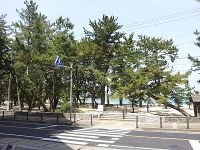 大浜海岸2013.jpg