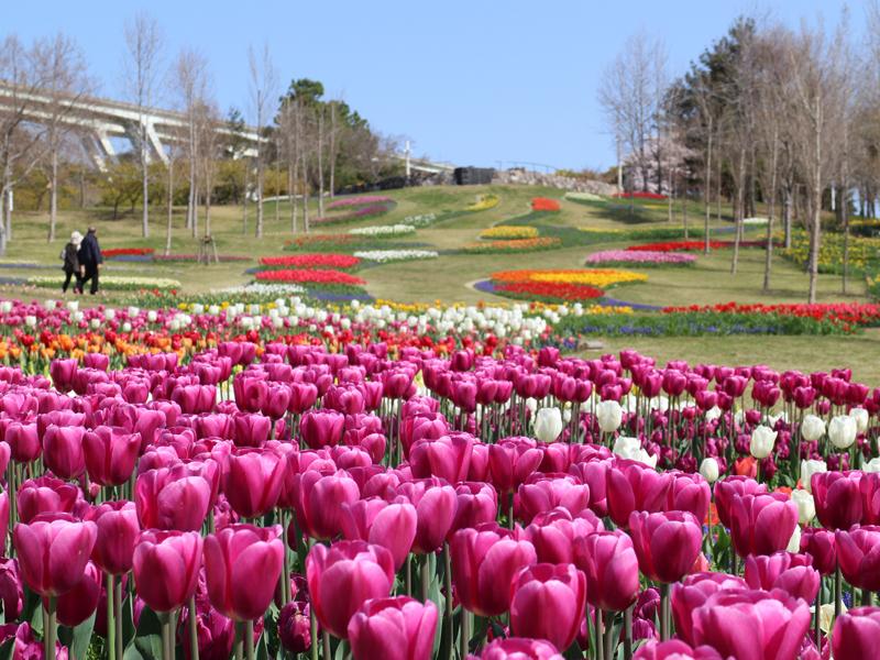 淡路島に春の訪れを告げる『淡路花祭2020春』開催!