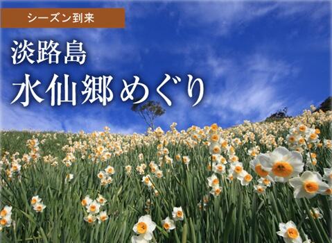 まもなくシーズン到来!淡路島の水仙郷